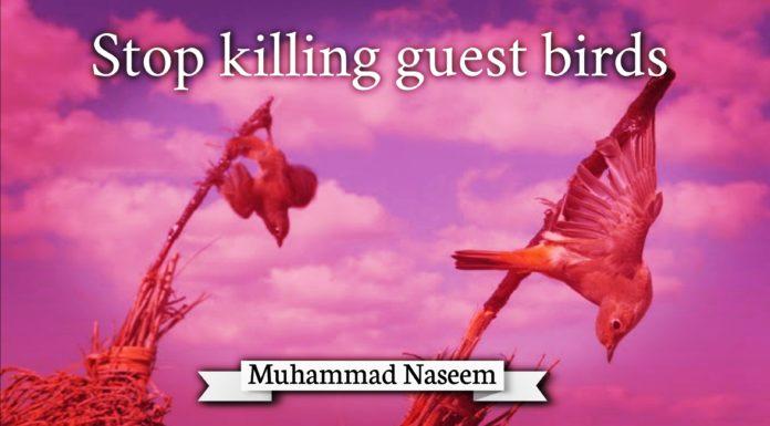 Stop killing guest Birds Muhammad Naseem